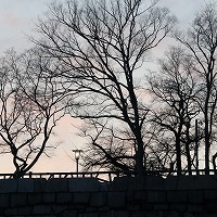 説明: C:\Users\NS00177\Desktop\中江\写真\EOS M5 大阪城梅\Resized\IMG_0299.jpg