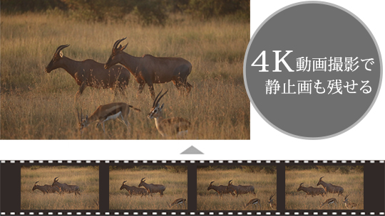 4K動画の1フレームをJPEGで保存