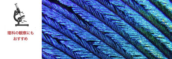 手軽に撮れる 「デジタル顕微鏡モード」